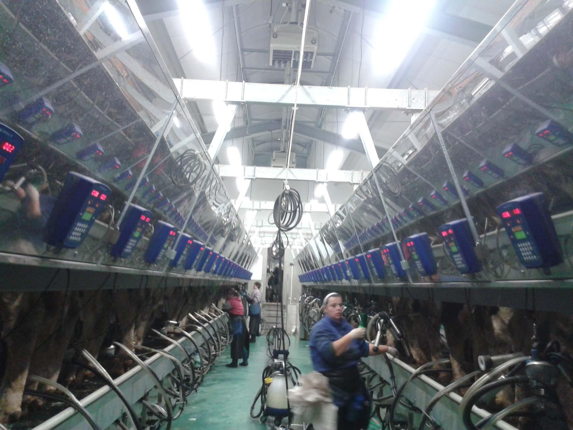 Velkokapacitní kravín Uhelná Příbram